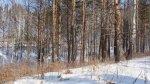 Продам участок в лесу рядом с озером Тюмень